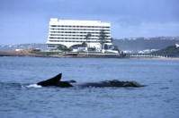 Beacon Island Hotel and Whale